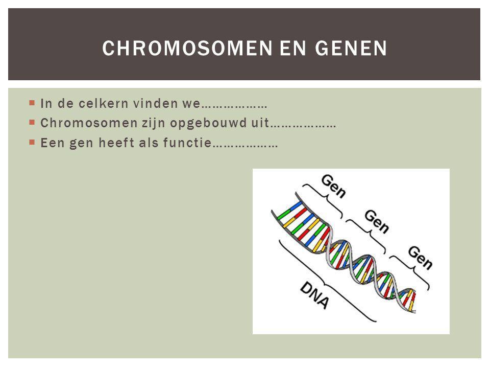  In de celkern vinden we………………  Chromosomen zijn opgebouwd uit………………  Een gen heeft als functie……………… CHROMOSOMEN EN GENEN