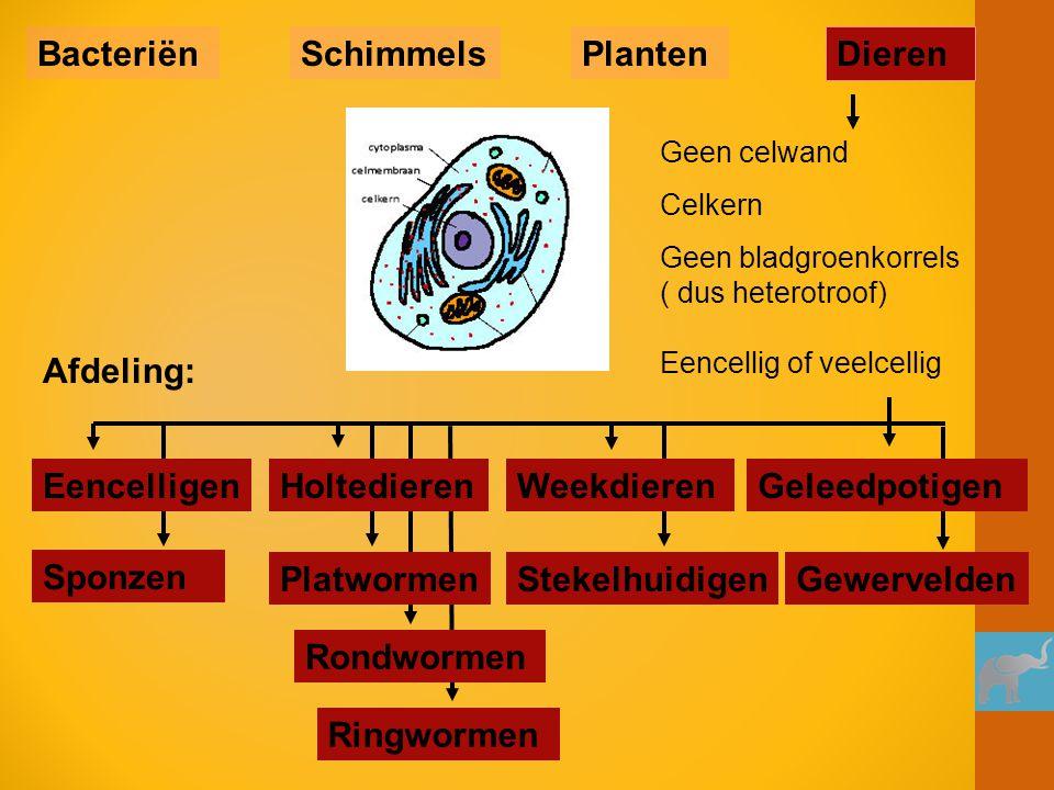Slak Oesters Tweezijdig symmetrisch Meestal een schelp of huisje als skelet Weekdieren BacteriënSchimmelsPlanten Dieren Afdeling: Inktvissen