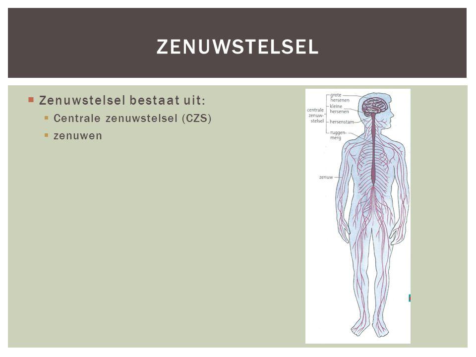  Zenuwstelsel bestaat uit:  Centrale zenuwstelsel (CZS)  zenuwen ZENUWSTELSEL