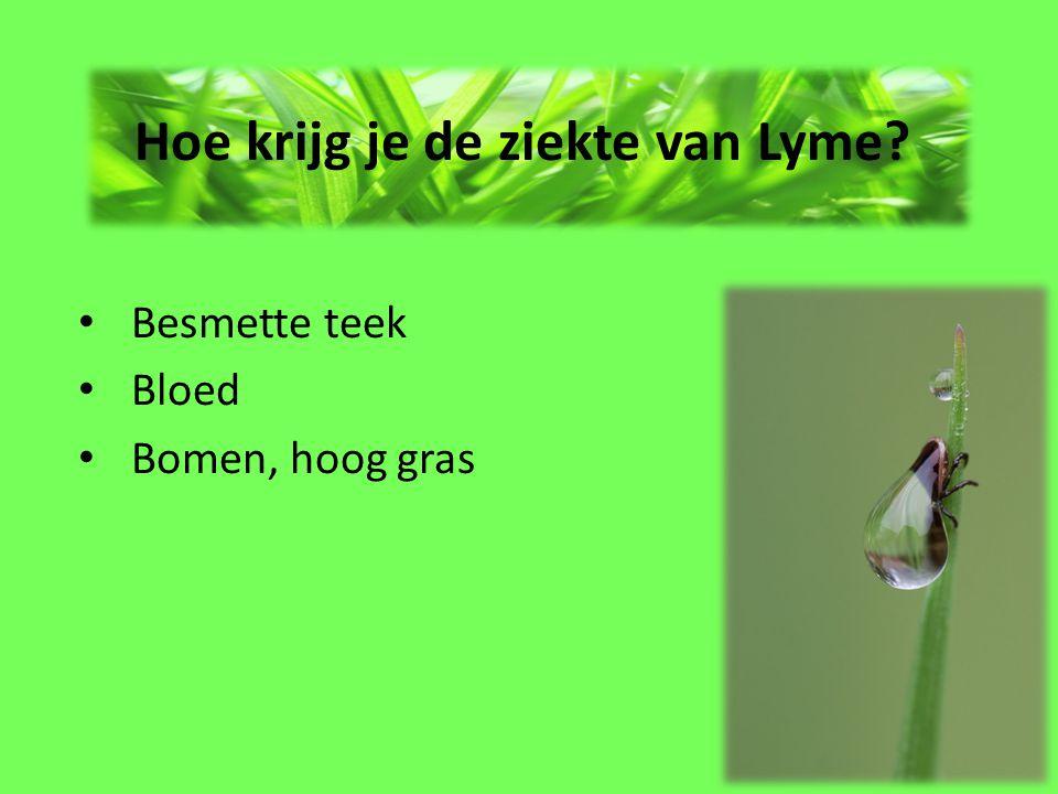 Hoe krijg je de ziekte van Lyme? Besmette teek Bloed Bomen, hoog gras