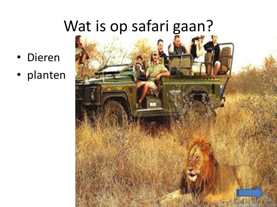 Welke dieren kun je zien als je op safari gaat.