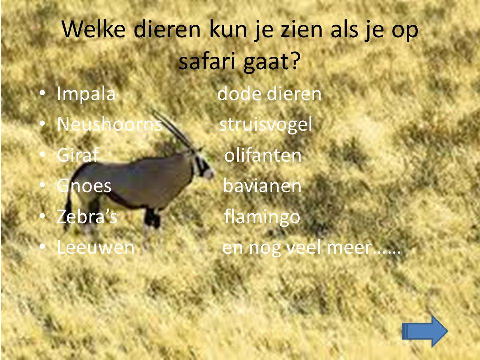 Welke dieren kun je zien als je op safari gaat? Impala dode dieren Neushoorns struisvogel Giraf olifanten Gnoes bavianen Zebra's flamingo Leeuwen en n
