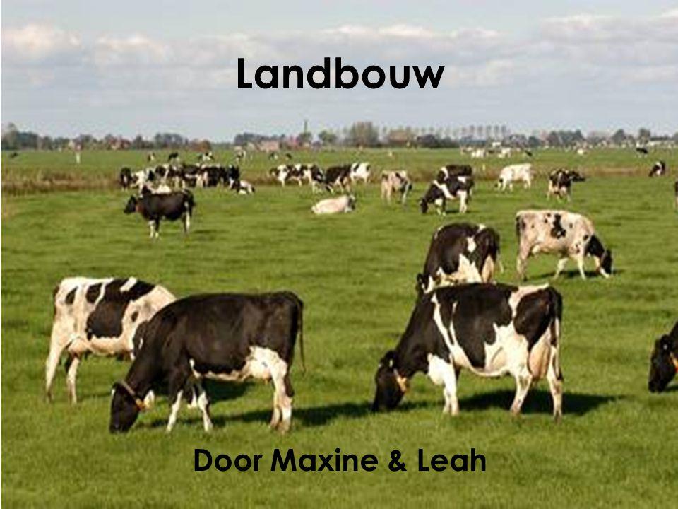 Landbouw Door Maxine & Leah