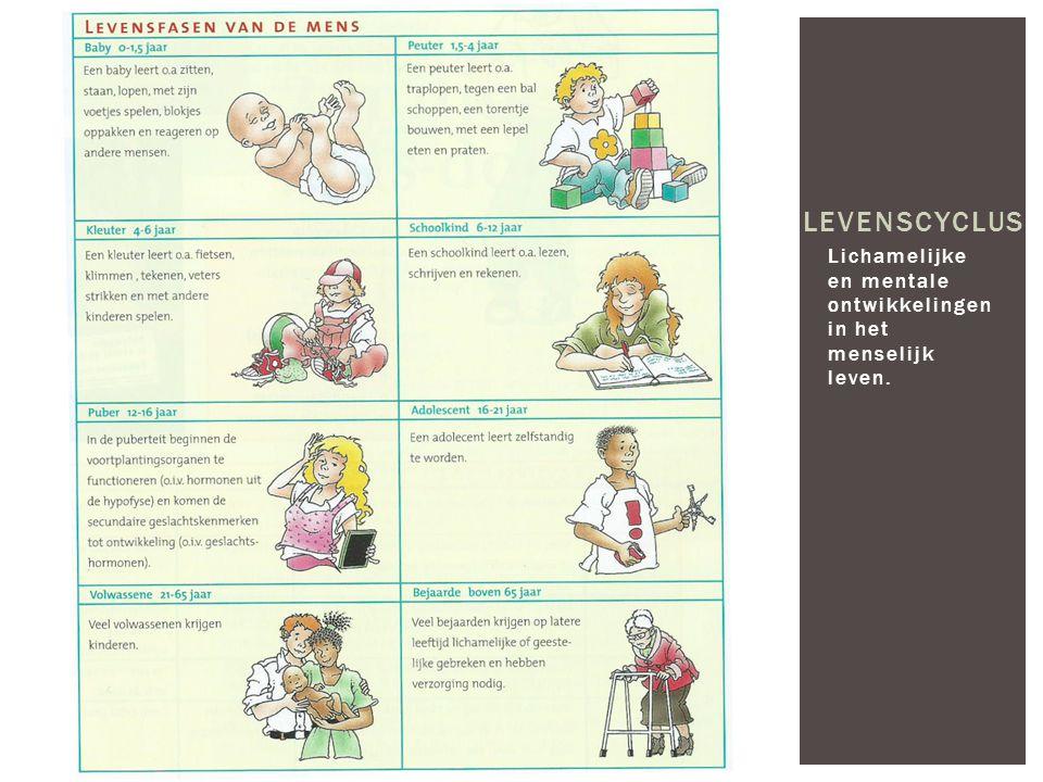 Lichamelijke en mentale ontwikkelingen in het menselijk leven. LEVENSCYCLUS
