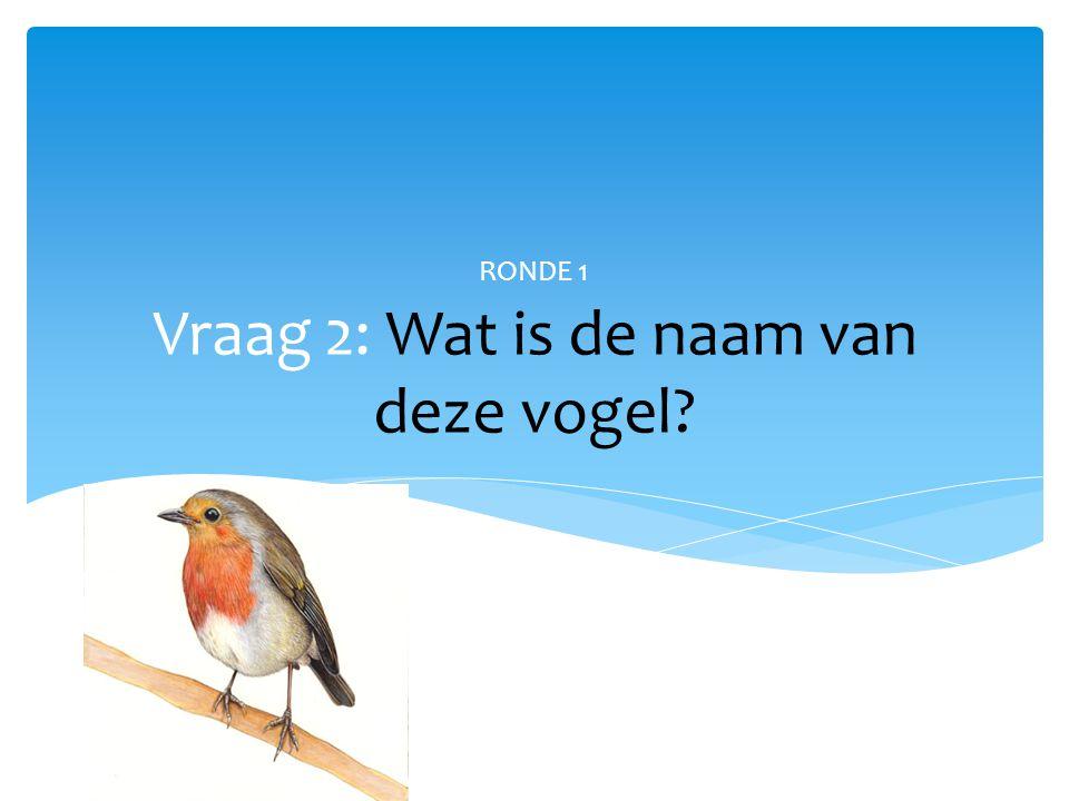 Vraag 2: Wat is de naam van deze vogel? RONDE 1