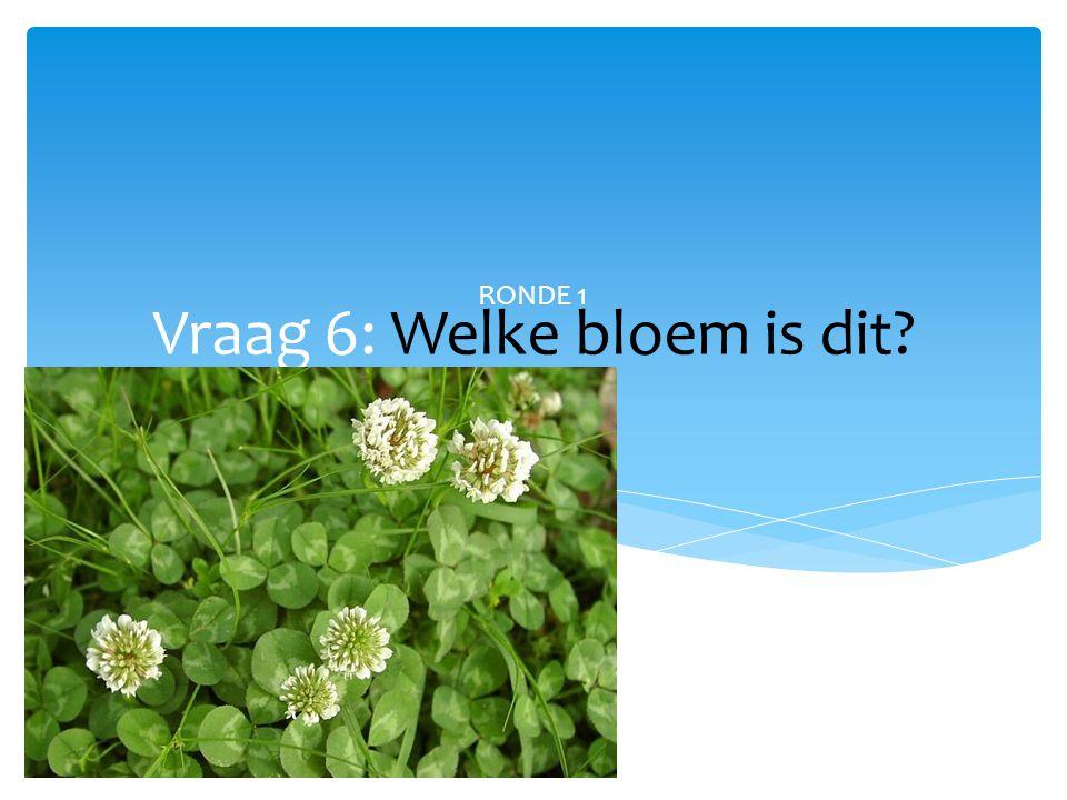 Vraag 6: Welke bloem is dit? RONDE 1
