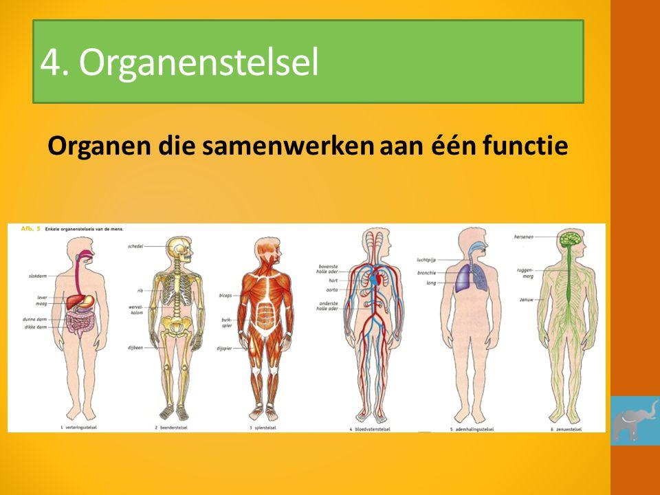 4. Organenstelsel Organen die samenwerken aan één functie