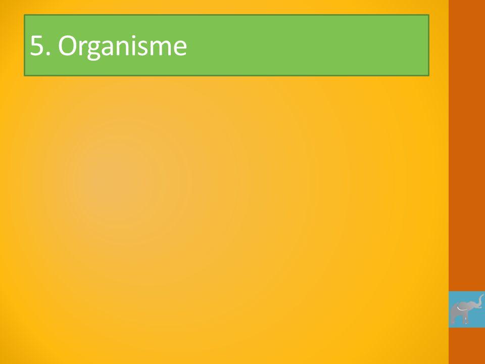 5. Organisme