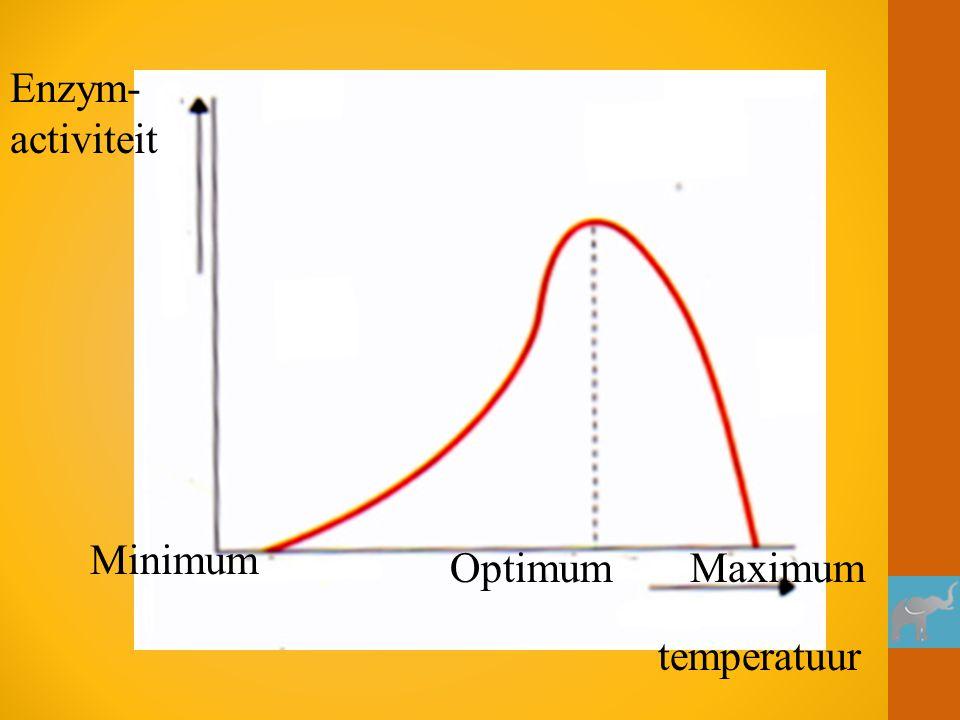 Minimum OptimumMaximum Enzym- activiteit temperatuur