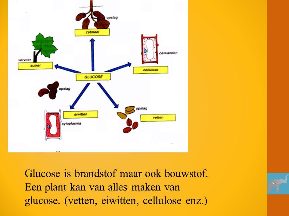 Glucose is brandstof maar ook bouwstof. Een plant kan van alles maken van glucose. (vetten, eiwitten, cellulose enz.)