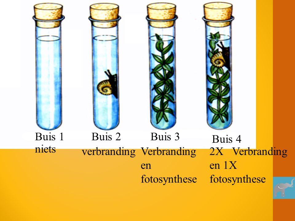 Buis 1 Buis 4 Buis 3Buis 2 verbrandingVerbranding en fotosynthese 2X Verbranding en 1X fotosynthese niets
