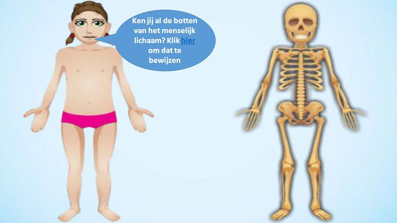 Ken jij al de botten van het menselijk lichaam? Klik hier om dat te bewijzenhier
