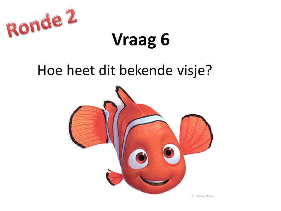 Vraag 6 Hoe heet dit bekende visje?