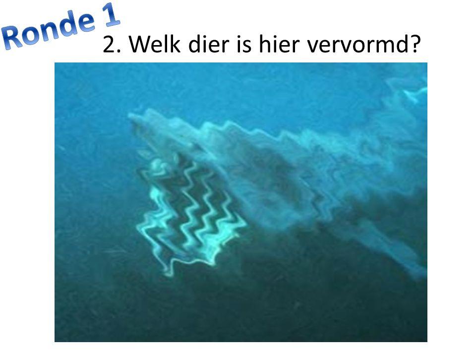 10. Juist of fout? De witte haai is de grootste roofvis ter wereld.