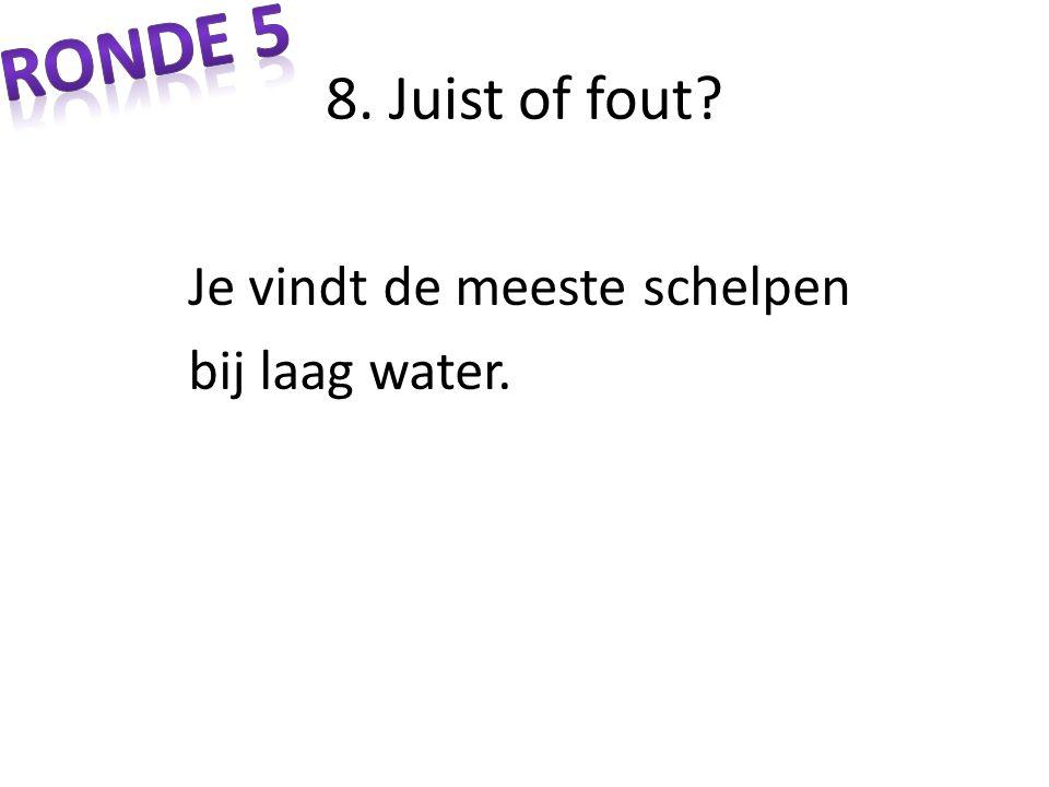8. Juist of fout? Je vindt de meeste schelpen bij laag water.