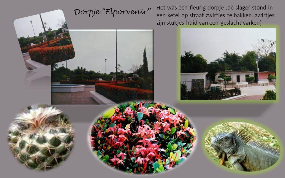 Dorpje Elporvenir Het was een fleurig dorpje,de slager stond in een ketel op straat zwirtjes te bakken.[zwirtjes zijn stukjes huid van een geslacht varken]