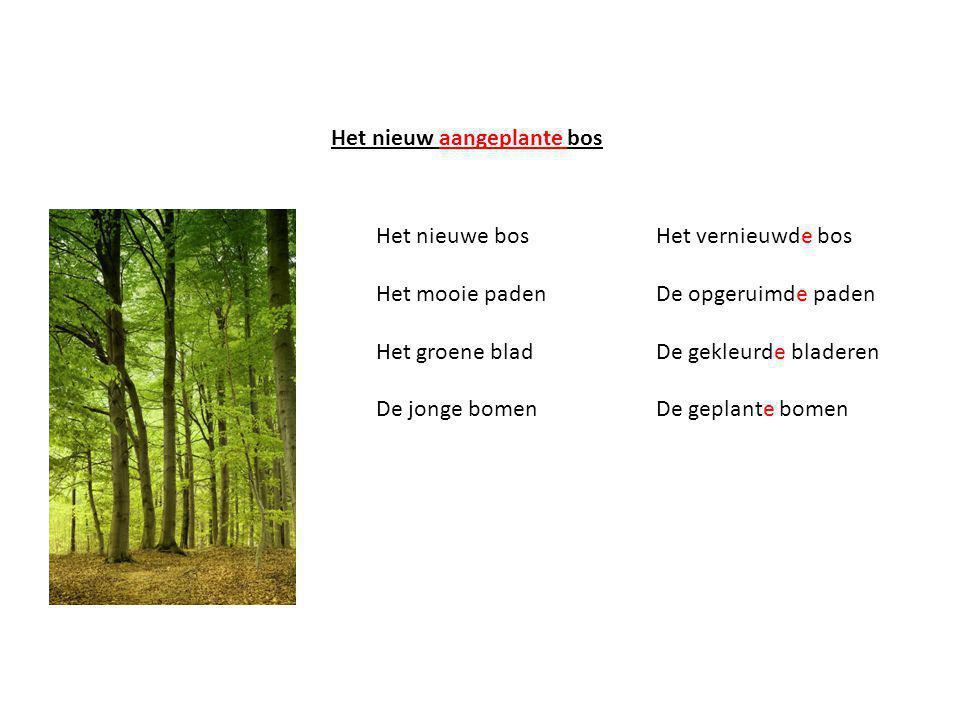 Het nieuw aangeplante bos Het nieuwe bos Het mooie paden Het groene blad De jonge bomen Het vernieuwde bos De opgeruimde paden De gekleurde bladeren De geplante bomen