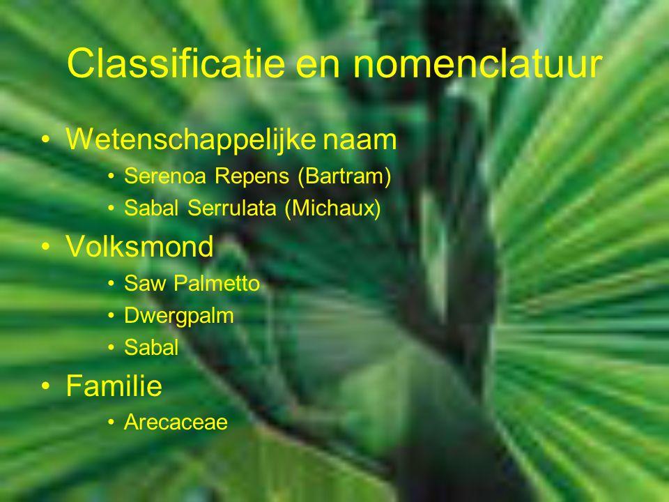 Classificatie en nomenclatuur Wetenschappelijke naam Serenoa Repens (Bartram) Sabal Serrulata (Michaux) Volksmond Saw Palmetto Dwergpalm Sabal Familie Arecaceae