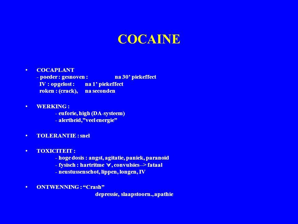 COCAINE COCAPLANT - poeder : gesnoven : na 30' piekeffect IV : opgelost : na 1' piekeffect roken : (crack), na seconden WERKING : - euforie, high (DA-systeem) - alertheid, veel energie TOLERANTIE : snel TOXICITEIT : - hoge dosis : angst, agitatie, paniek, paranoid - fysisch : hartritme , convulsies--> fataal - neustussenschot, lippen, longen, IV ONTWENNING : Crash depressie, slaapstoorn., apathie