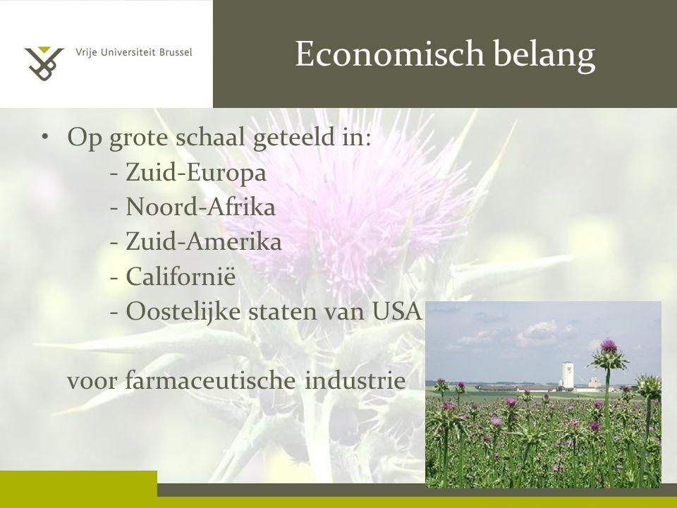 Economisch belang Op grote schaal geteeld in: - Zuid-Europa - Noord-Afrika - Zuid-Amerika - Californië - Oostelijke staten van USA voor farmaceutische industrie