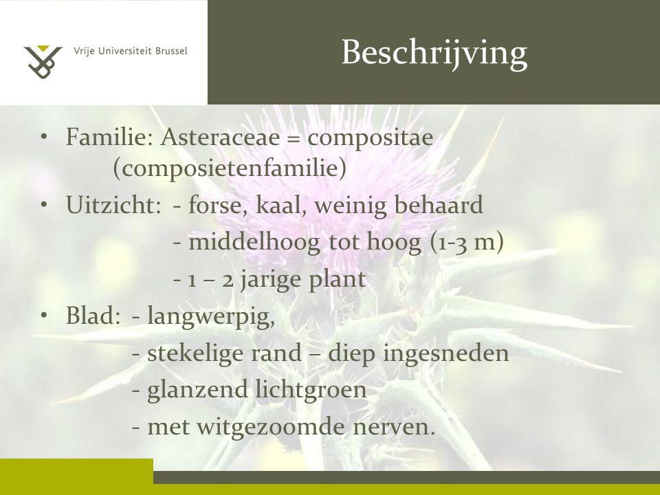Beschrijving Familie: Asteraceae = compositae (composietenfamilie) Uitzicht: - forse, kaal, weinig behaard - middelhoog tot hoog (1-3 m) - 1 – 2 jarige plant Blad:- langwerpig, - stekelige rand – diep ingesneden - glanzend lichtgroen - met witgezoomde nerven.