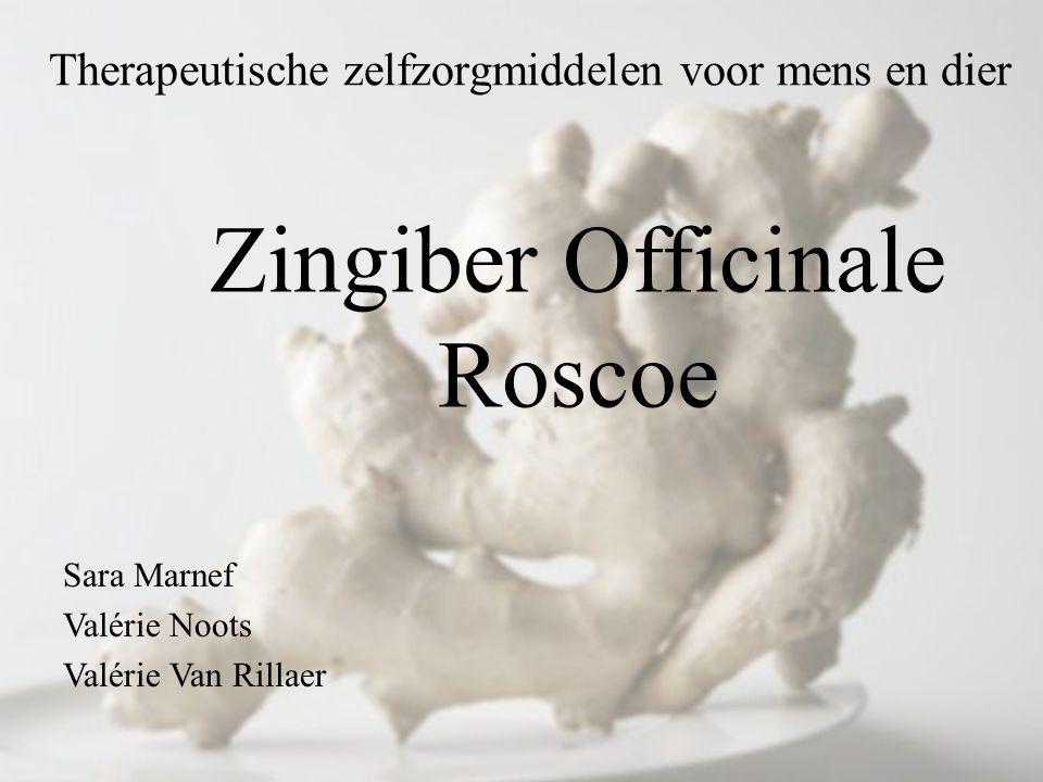 Therapeutische zelfzorgmiddelen voor mens en dier Sara Marnef Valérie Noots Valérie Van Rillaer Zingiber Officinale Roscoe