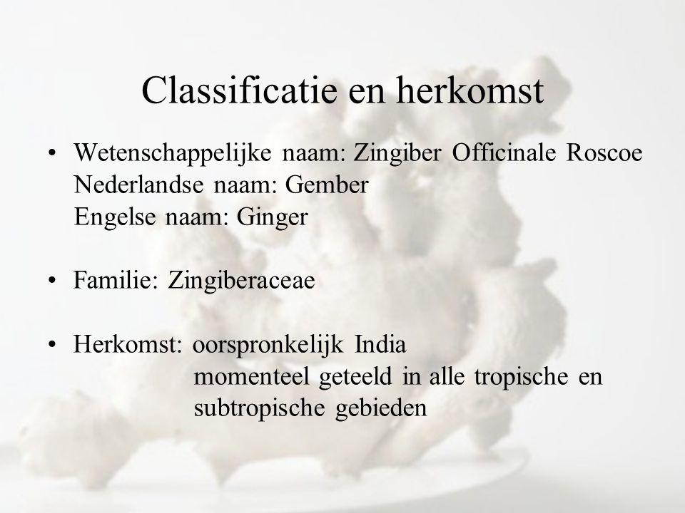 Classificatie en herkomst Wetenschappelijke naam: Zingiber Officinale Roscoe Nederlandse naam: Gember Engelse naam: Ginger Familie: Zingiberaceae Herk