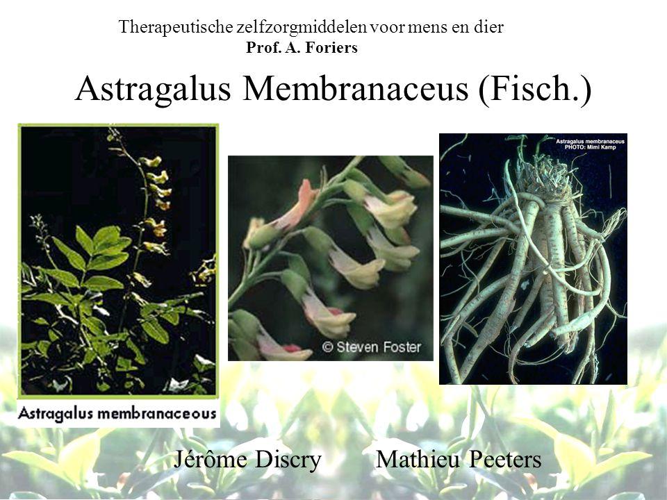 Astragalus Membranaceus (Fisch.) Jérôme Discry Mathieu Peeters Therapeutische zelfzorgmiddelen voor mens en dier Prof. A. Foriers
