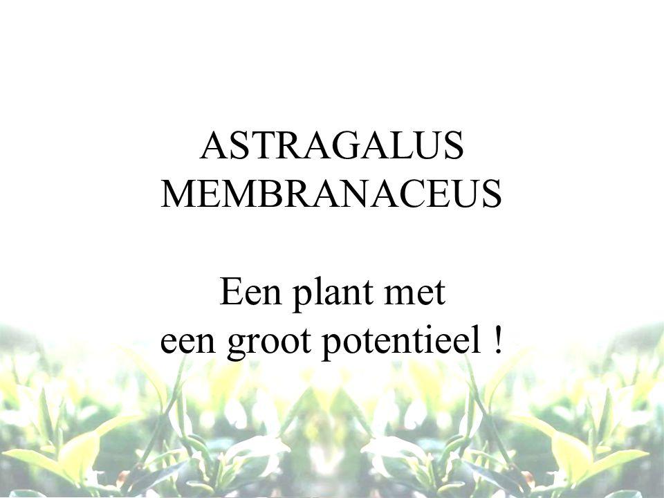 ASTRAGALUS MEMBRANACEUS Een plant met een groot potentieel !