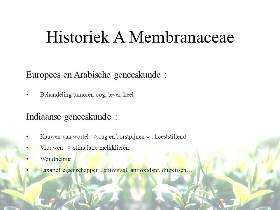 Historiek A Membranaceae Europees en Arabische geneeskunde : Behandeling tumoren oog, lever, keel Indiaanse geneeskunde : Kauwen van wortel => rug en