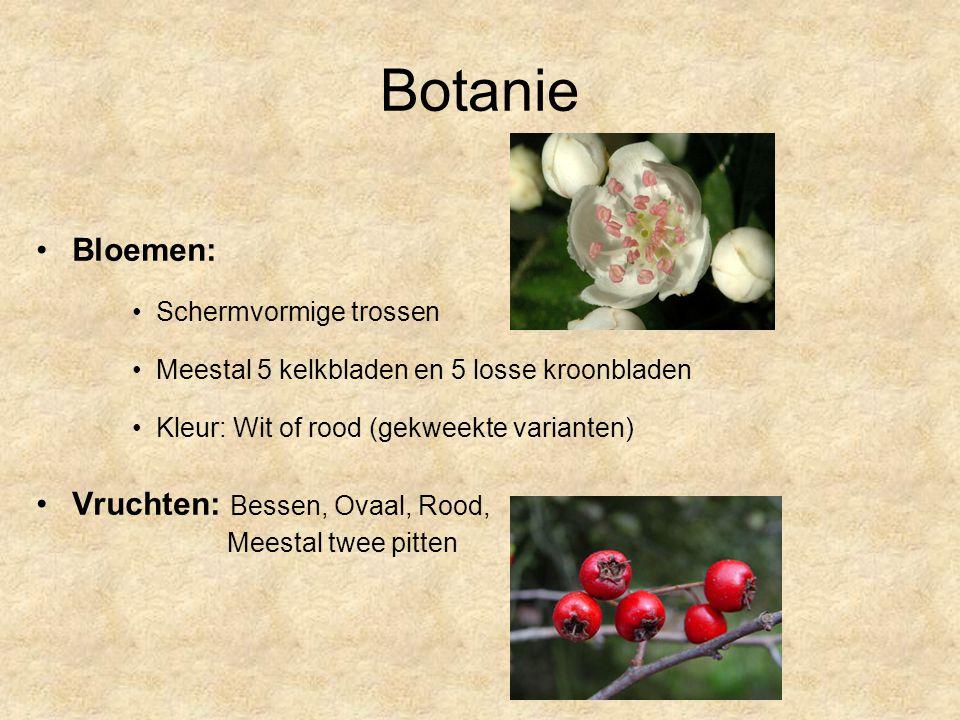 Botanie Bloemen: Schermvormige trossen Meestal 5 kelkbladen en 5 losse kroonbladen Kleur: Wit of rood (gekweekte varianten) Vruchten: Bessen, Ovaal, Rood, Meestal twee pitten