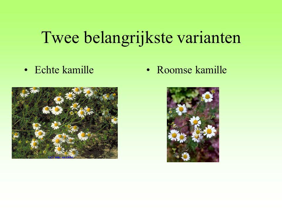 Latijnse naam: Chamomilla vulgaris Chamomilla recutita Nederlandse naam: Echte kamille, Duitse kamille, Veldkamille, Moederkruid Franse naam: Camomille allemande Camomille commune Matricaire Engelse naam: German camomile