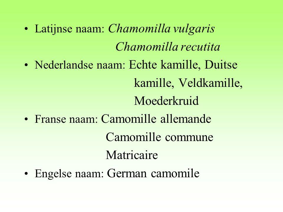 Latijnse naam: Chamomilla vulgaris Chamomilla recutita Nederlandse naam: Echte kamille, Duitse kamille, Veldkamille, Moederkruid Franse naam: Camomill