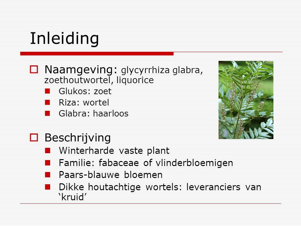Inleiding  Naamgeving: glycyrrhiza glabra, zoethoutwortel, liquorice Glukos: zoet Riza: wortel Glabra: haarloos  Beschrijving Winterharde vaste plan