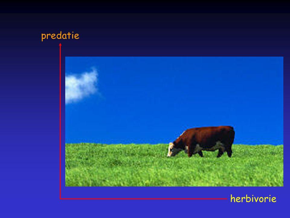 herbivorie