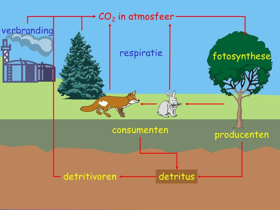 CO 2 in atmosfeer fotosynthese producenten respiratie consumenten detritus verbranding detritivoren