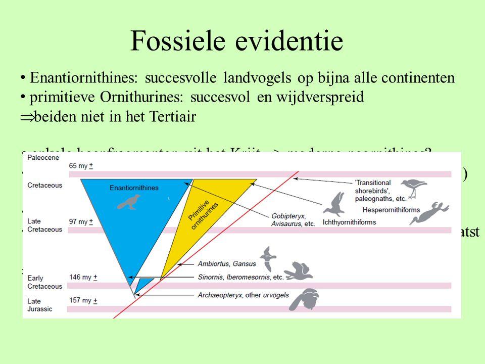 Fossiele evidentie Enantiornithines: succesvolle landvogels op bijna alle continenten primitieve Ornithurines: succesvol en wijdverspreid  beiden nie