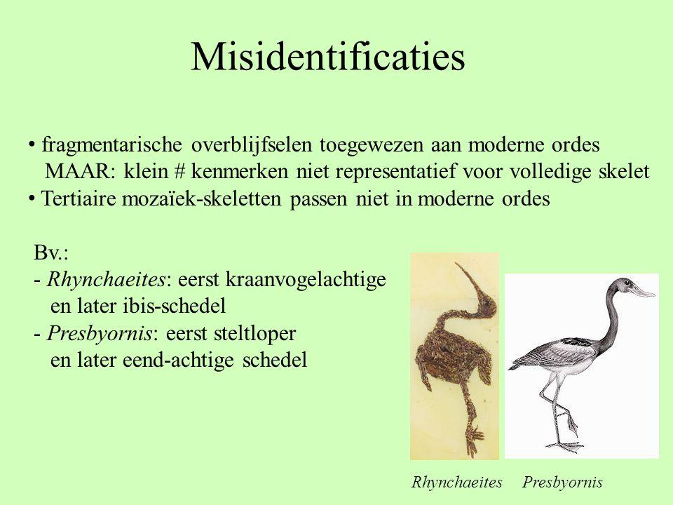 Misidentificaties fragmentarische overblijfselen toegewezen aan moderne ordes MAAR: klein # kenmerken niet representatief voor volledige skelet Tertia