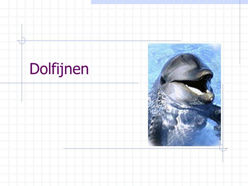 Ontstaan Familie Woongebied Lichaamsbouw Voedsel Ademhaling Levensloop Dolfijnen