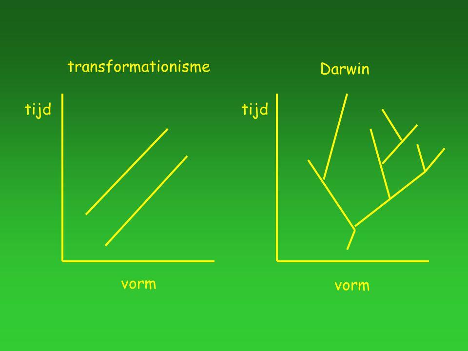 tijd vorm transformationisme tijd vorm Darwin