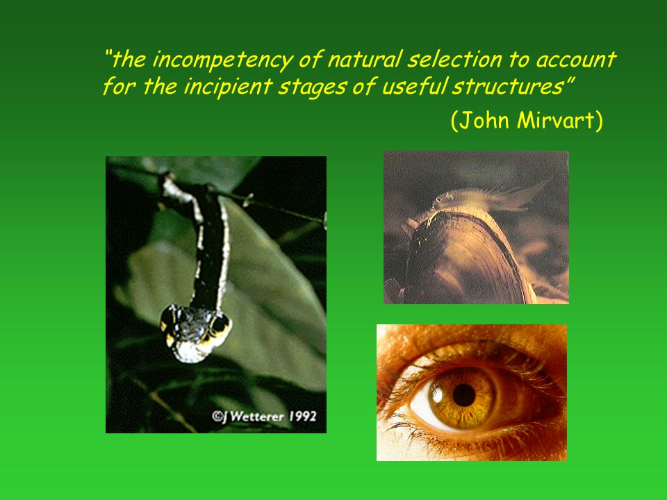 the incompetency of natural selection to account for the incipient stages of useful structures (John Mirvart)