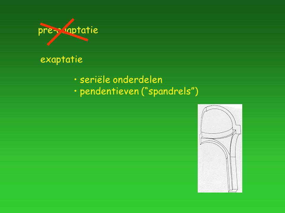 """pre-adaptatie exaptatie seriële onderdelen pendentieven (""""spandrels"""")"""