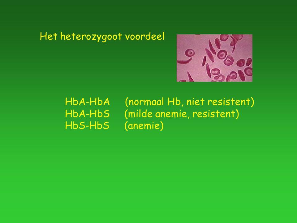 Het heterozygoot voordeel HbA-HbA (normaal Hb, niet resistent) HbA-HbS(milde anemie, resistent) HbS-HbS(anemie)