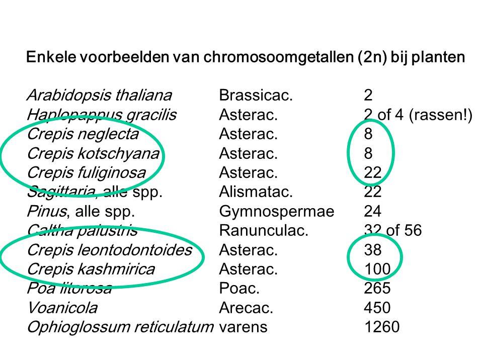 Enkele voorbeelden van chromosoomgetallen (2n) bij planten Arabidopsis thalianaBrassicac.2 Haplopappus gracilisAsterac.2 of 4 (rassen!) Crepis neglect