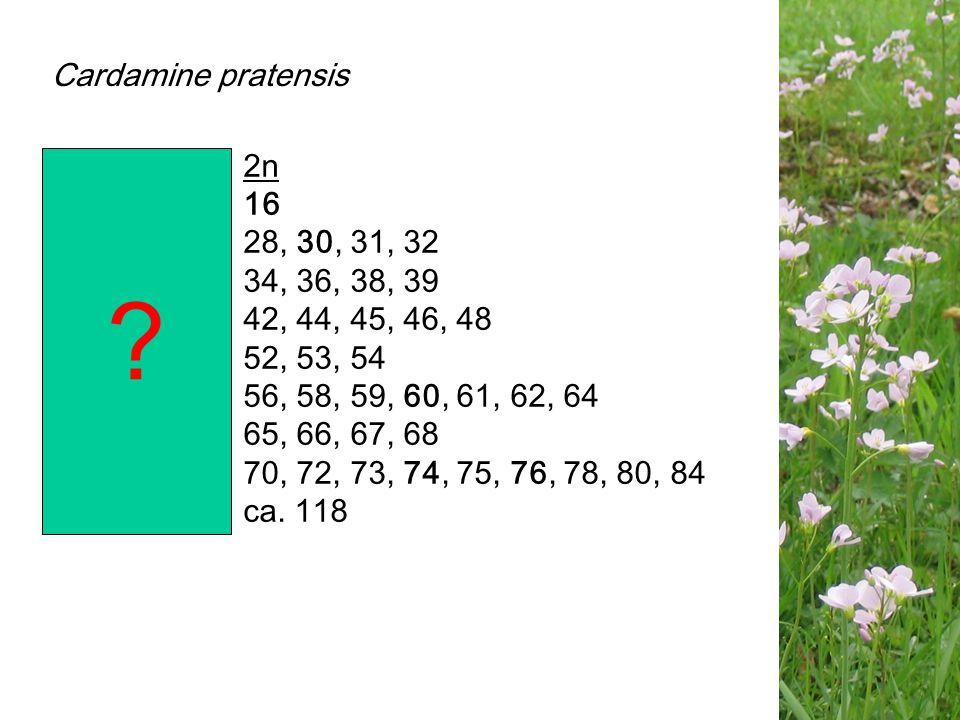 ploïdie2n di-16 tetra-28, 30, 31, 32 hybridogeen34, 36, 38, 39 hexa- 42, 44, 45, 46, 48 hybridogeen52, 53, 54 octo-56, 58, 59, 60, 61, 62, 64 hybridog