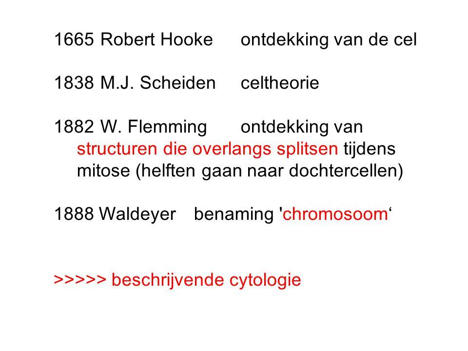 1665Robert Hookeontdekking van de cel 1838M.J. Scheidenceltheorie 1882W. Flemmingontdekking van structuren die overlangs splitsen tijdens mitose (helf