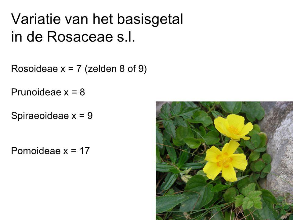 Variatie van het basisgetal in de Rosaceae s.l. Rosoideae x = 7 (zelden 8 of 9) Prunoideae x = 8 Spiraeoideae x = 9 Pomoideae x = 17