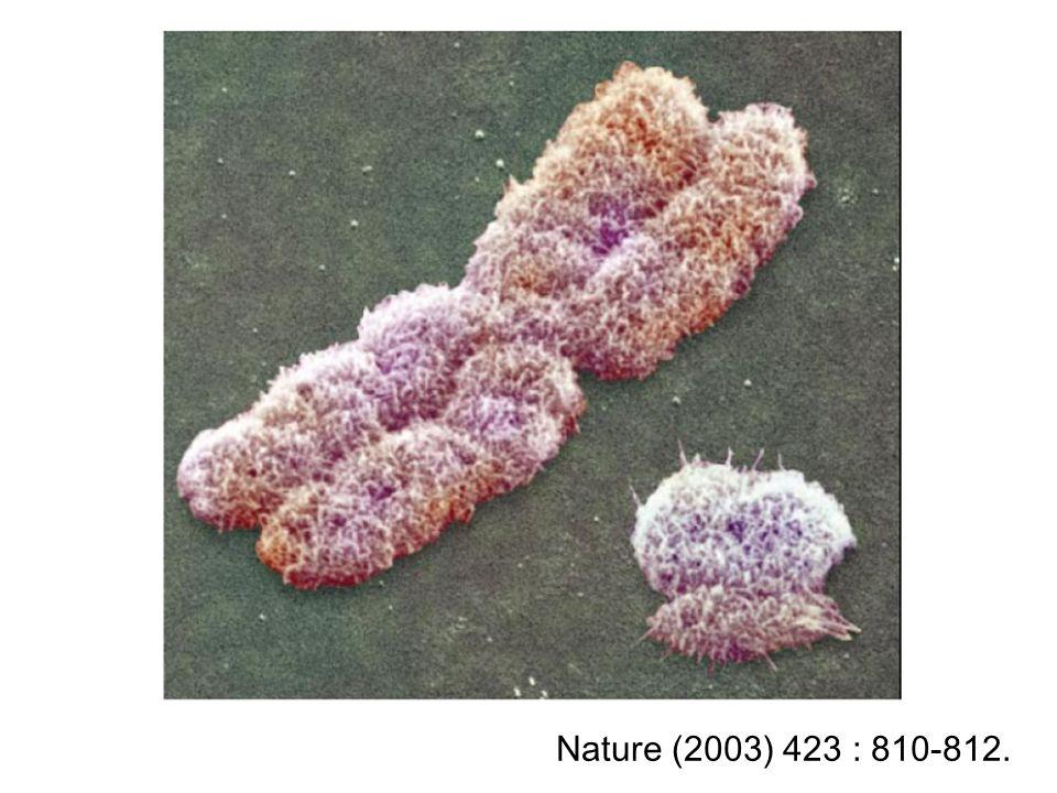 Nature (2003) 423 : 810-812.