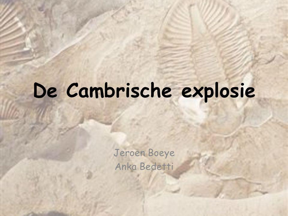 Fossielen uit de Burgess shale Anomalocaris -Predator + Goede zwemmer -Tot 1m lang -Taxonomisch probleem