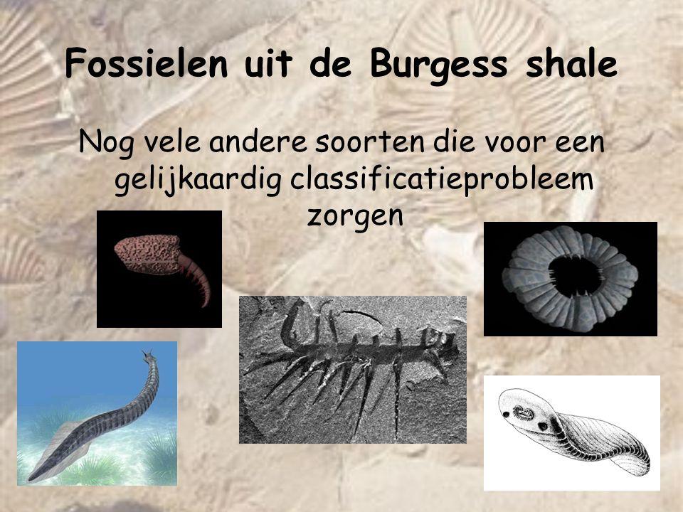 Nog vele andere soorten die voor een gelijkaardig classificatieprobleem zorgen